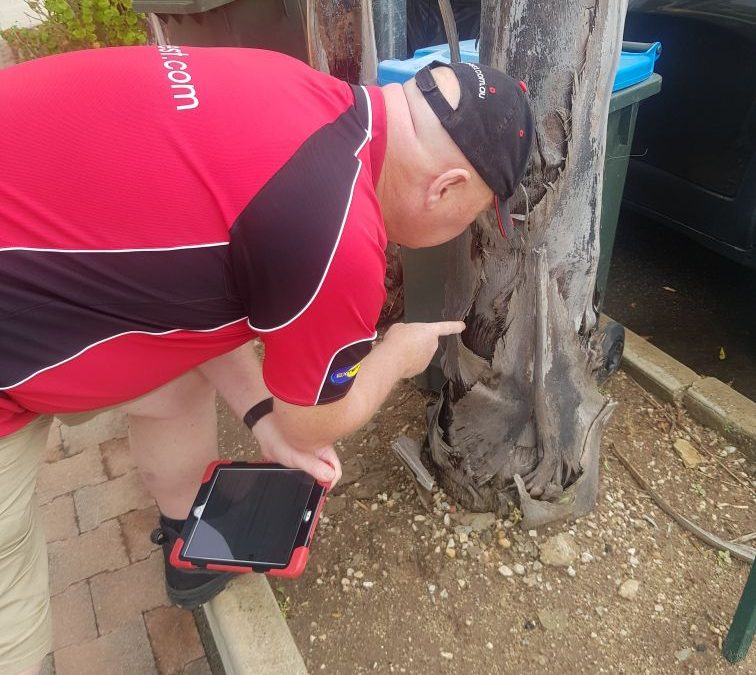 How to get the best eco friendly pest control specialist in Adelaide