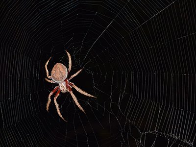 Jim's pest control - ozpestadelaide - spider control adelaide